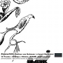 Zmitser von Holzman – A Beard Like a Bird
